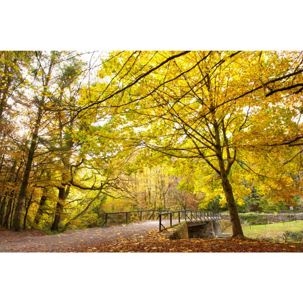 Autumn Colligan Wood Dungarvan